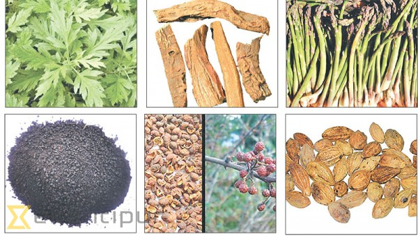 'Potential of Nepali herbal products still untapped'