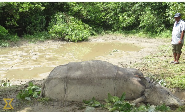 Chitwan National Park builds and restores ponds for rhinos