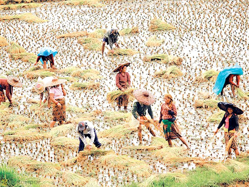 Study recommends Rs. 4,000 monthly pension for farmers
