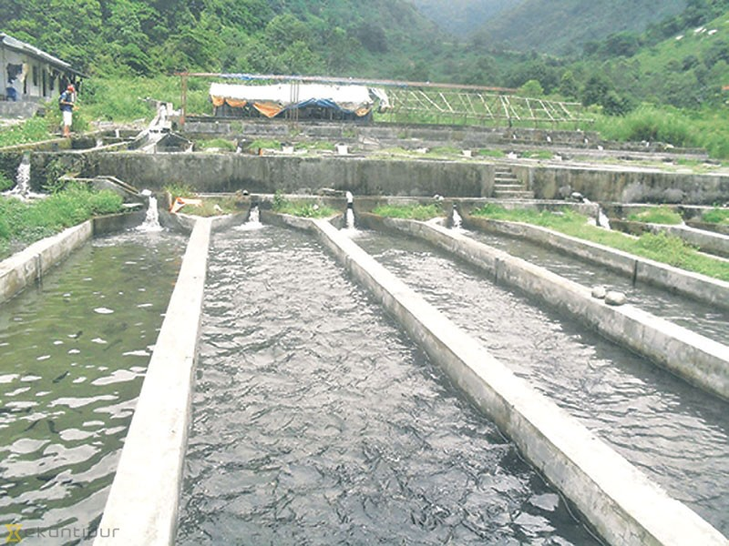 Govt\'s fish farming project flounders - Money - The Kathmandu Post