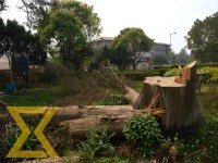 A tree was fell in the country's main administrative centreSingha Durbar on Monday.