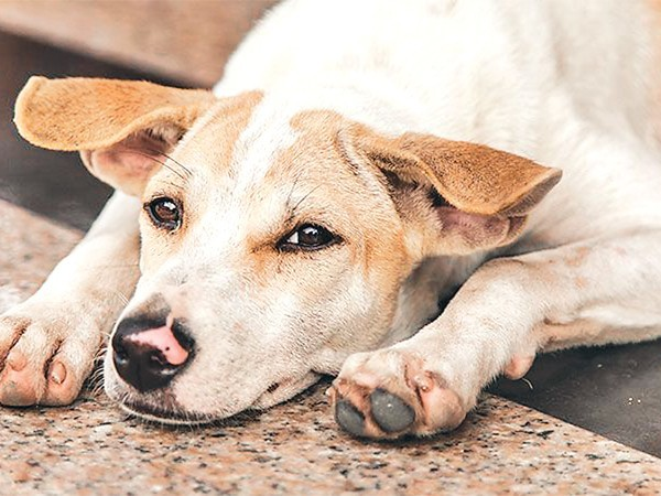 KMC seeks support to manage stray dogs