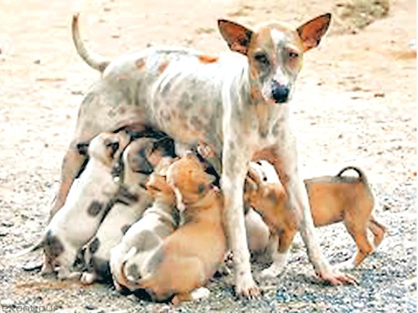 Image result for campaign to  street dogs