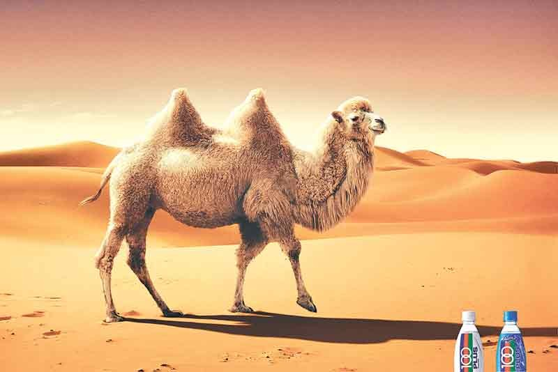 camel milk Aadvik foods – buy 100% pure camel milk online in india our camel milk  reaches you in uniquely designed, food grade sterilised pet bottles and keeping  all.