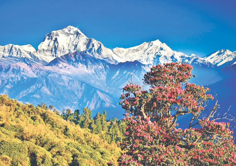 my country nepal Reviews from kimkim travelers who recently i am the native citizen of this beautiful country, nepal traveling has always been my passion as there is so much to.