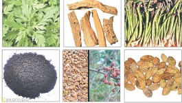 Medicinal and aromatic plants' potential remains untapped: Experts