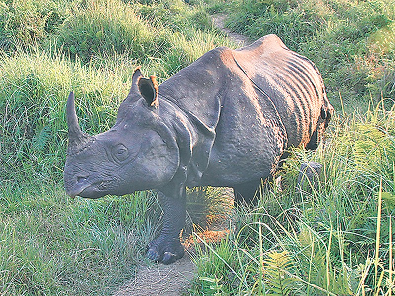 how would you reduce poaching if a rhino s horn could be cut and re grown in six years In two or three years time you can cut it sector all of which could be used to reduce poaching a bull's eye honing in on a rhino horn with.