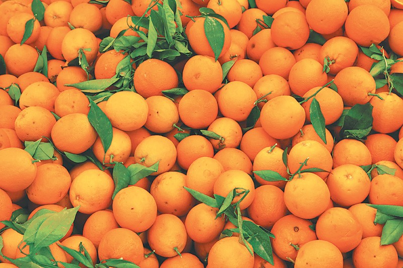 Dec 6 2016-Oranges worth more than Rs 600 million is traded in the agriculture market of Dharan every year. But lack of cold storage facilities is hurting ... & Lack of cold storage hurting farmers in East - MONEY - The Kathmandu ...