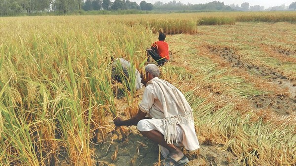 Paddy minimum support price not fixed citing elections