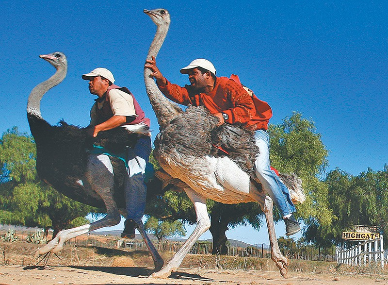 Birdriding Loses Luster In South Africas Ostrich Capital MONEY - Capital of south africa